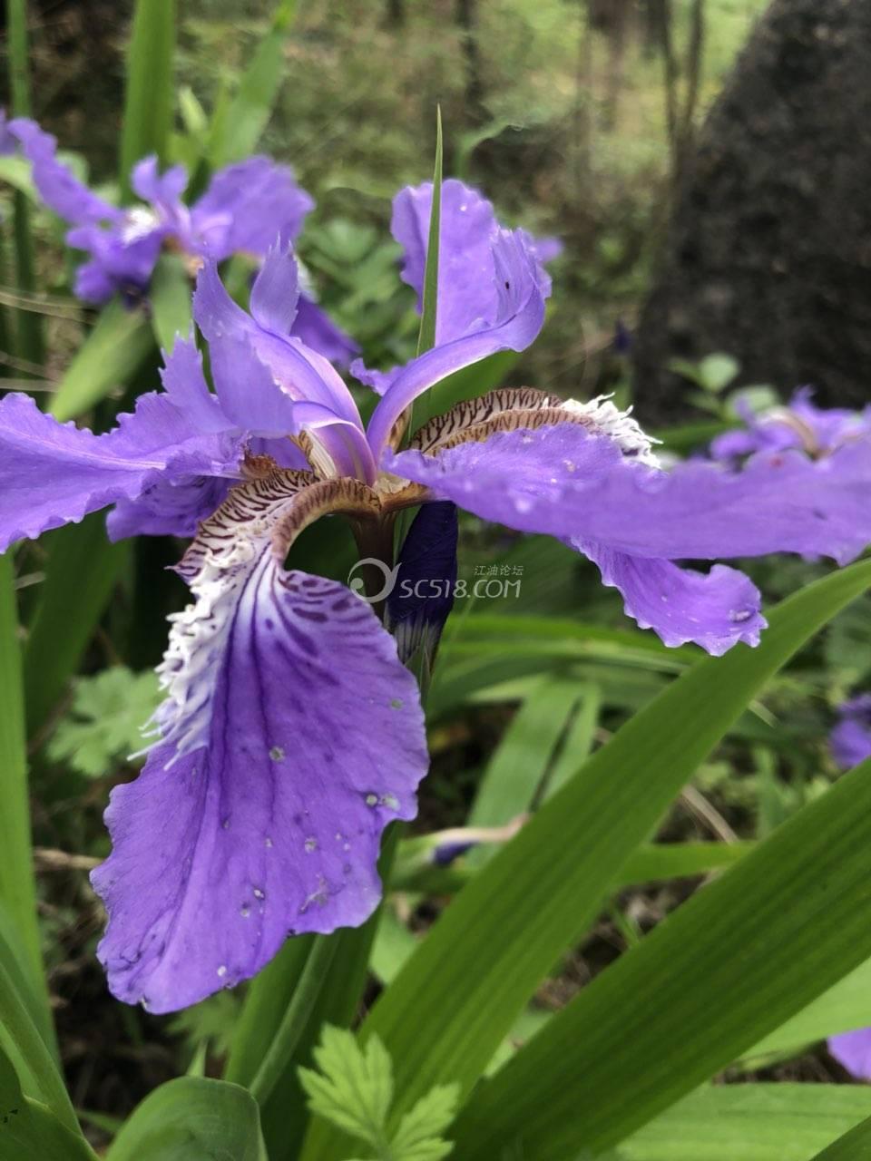 大自然中的花花草草!没人欣赏!还是美丽芬芳!