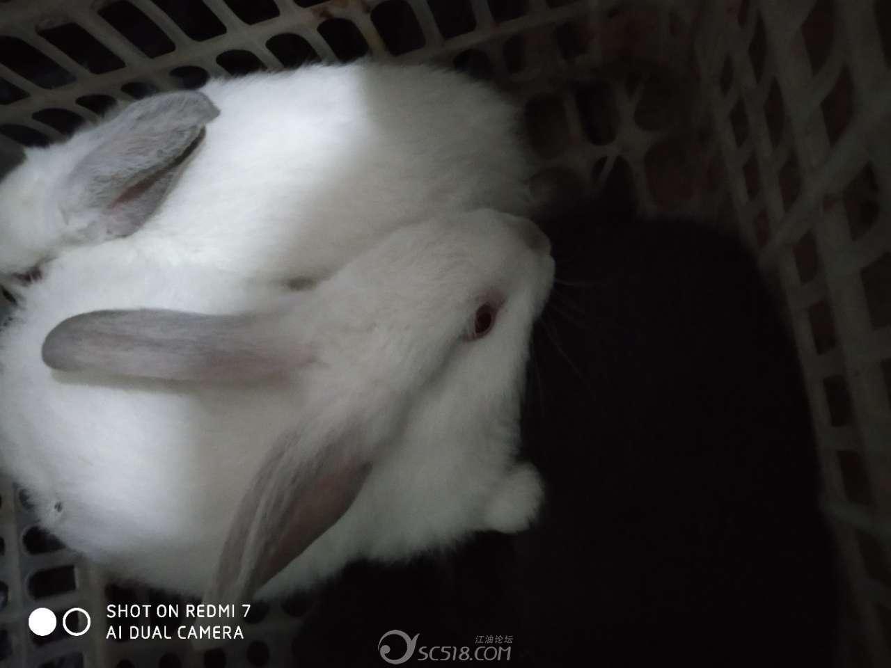 ��(��l$yil_小兔子