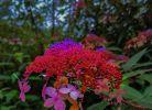 吳家后山的野花1