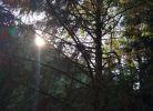 朝阳照林上,霞光映眼帘,人在画中走,暑日若春天。