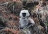 醉美亚东——藏边的高山杜鹃和长尾叶猴。
