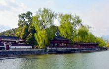 春风又绿杨柳枝
