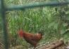 来来来蒙古包抓鸡摘桃钓清水鱼吃农家菜