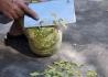 蓝天印在老农削南瓜皮的菜刀上