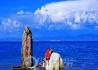 寻找去青海湖自驾游同行的驴友