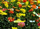开在春天的花