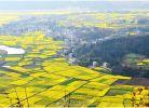 哪位高手可以给我讲讲小溪坝阴坪村的历史?
