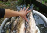 【太平派出所】太平镇红旗村鱼塘几家鱼都被偷了,现在的小偷都无法无天了