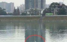 海鸥被鱼线缠着了, 哪个能不能救一下它