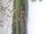 九岭芍药花盛开啦。钓鱼、观花、品农家菜。