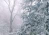 千佛山的雪松