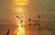 夕阳下的鸟儿