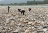 武都团山大桥下河滩每天引来不少村民捉打屁虫!