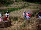 拍聚源生态农场