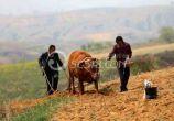 求助:按规定,现在农民什么时候可以退休?