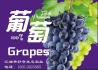 好奇生态葡萄一直都在