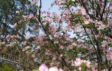 春节结束语:       自然地活着,平淡地过着,