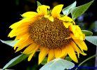 开在夏天的花