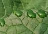 树叶上的绿宝石