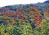 泗耳的彩林艳了!