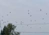 看着成群结伴的白鹤,钓着正宗的清水土鲫鱼……乐哉