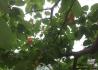 折嗯特老哦!又到了摘樱桃的季节了,快快带上你们家的