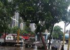 连下几天雨,这个树看到都要倒了,好危险