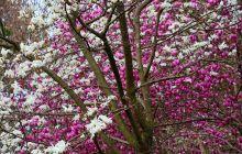 春日无处不飞花