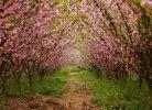 赏花季到了(宅家,发几张去年春天的照片)