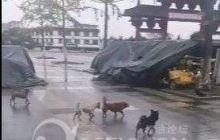 【文广旅局已回复】流浪狗成群