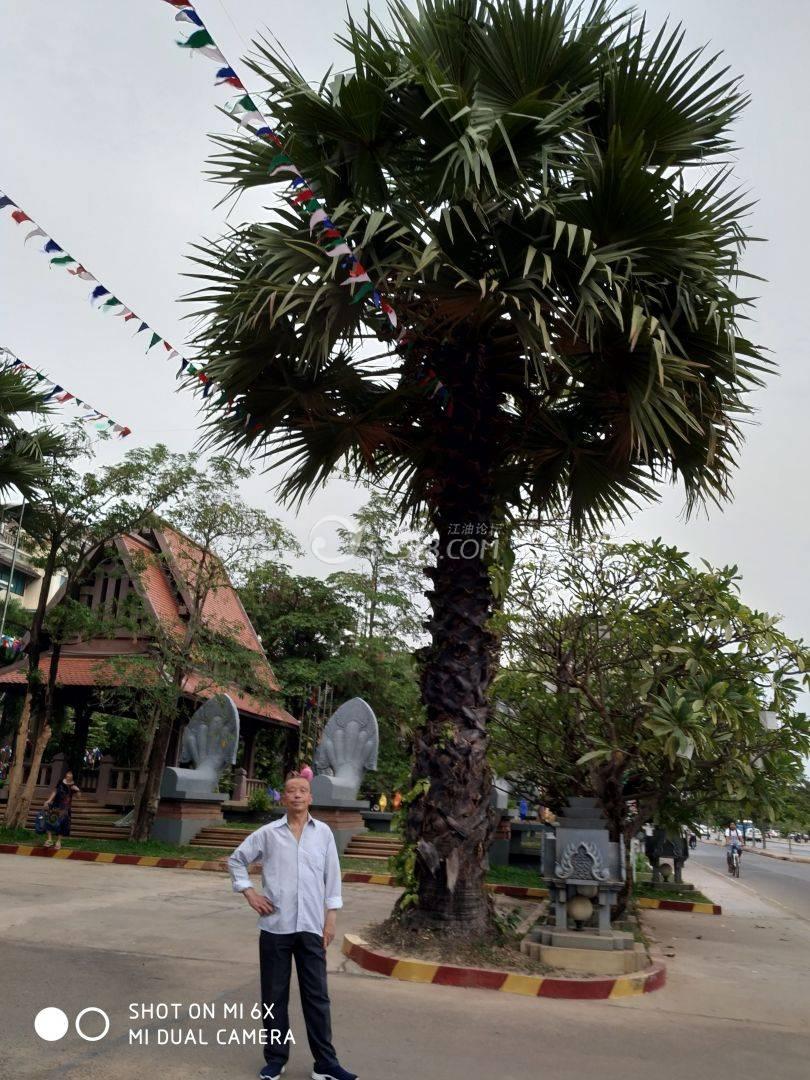 柬埔寨风光06.jpg