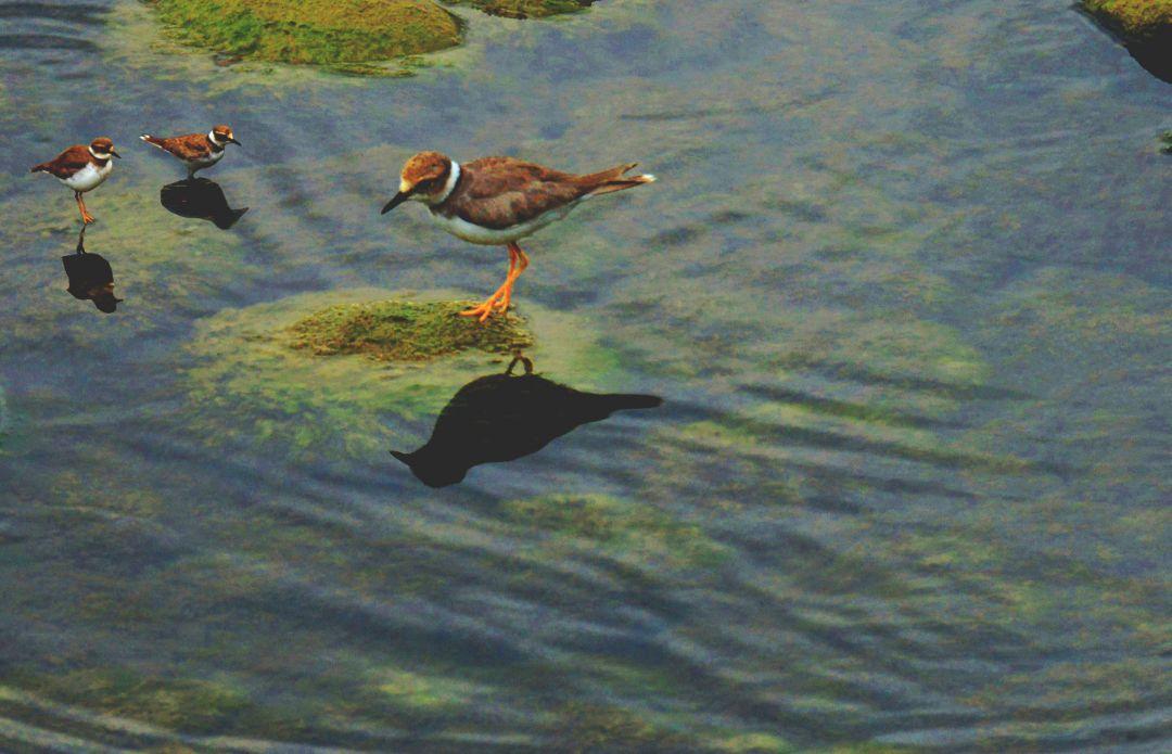 水鸟.jpg
