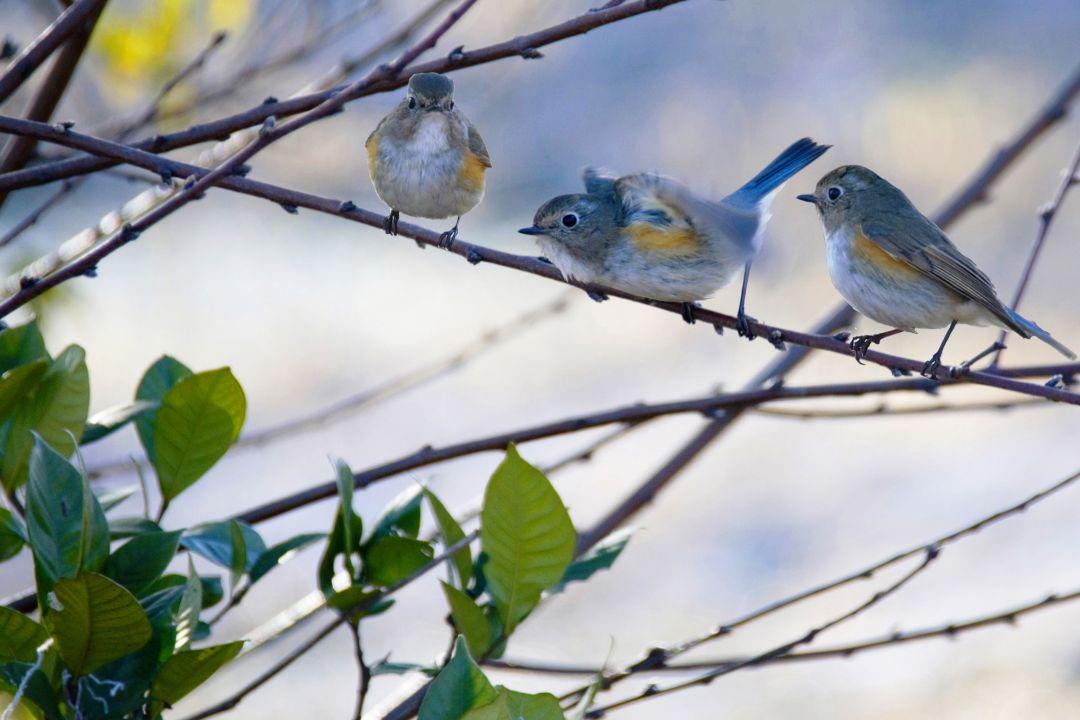 小鸟p.jpg