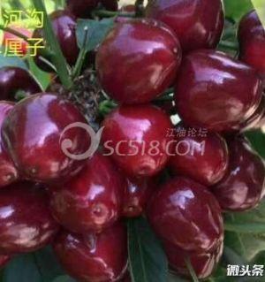 平武县弘安农业15881606532