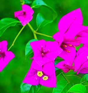 夏天,花开也妖艳。美