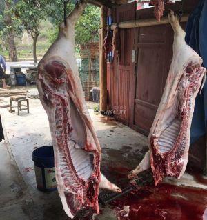卖藏香猪,粮食喂白猪肉