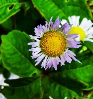 手机拍摄吴家后山的花3