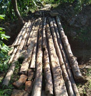我为大家清水沟搭木桥,流汗当减肥,土地公公送我一窝伞把菇