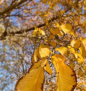 拾一叶霜降,吟颂秋韵绵长。