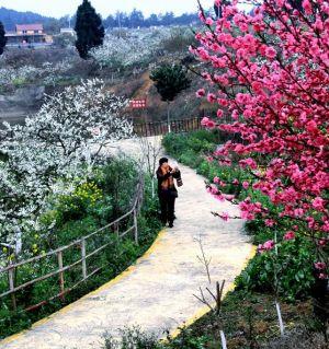 贯山马凤村的春天