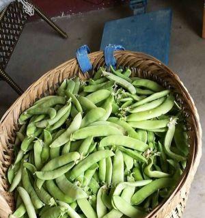 青豌豆荚有人收不.3.5一斤才摘的