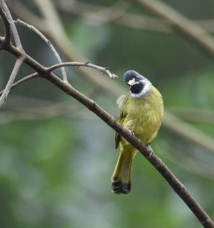 昌明河畔的小鸟。。。。