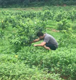 农业人的一天!