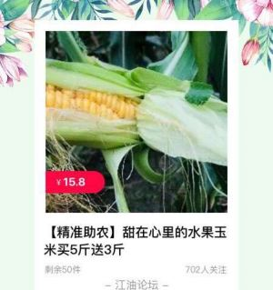 大康官渡村2万斤新鲜水果玉米急需待售!买五斤送三斤!仅需:15.8元