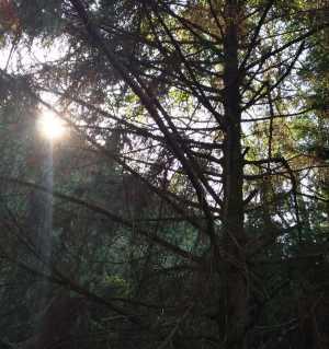 朝陽照林上,霞光映眼簾,人在畫中走,暑日若春天。