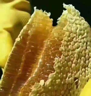 平武深山老蜂蜜 不添加任何东西