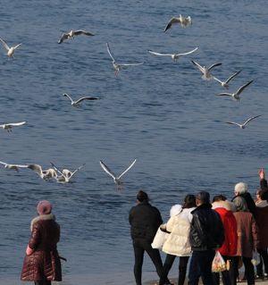 观鸟涪江边