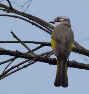 富乐山公园的鸟
