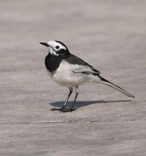 明月岛上的鸟