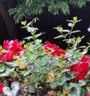 花开满园一一成都植物园